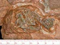 Tìm thấy bào thai khủng long cổ nhất