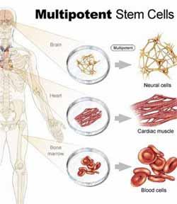 Phương pháp mới tạo tế bào gốc không làm chết phôi