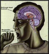 Phát hiện gen có liên quan đến giấc ngủ sâu