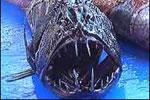 Những sinh vật kỳ dị dưới đáy biển New Zealand