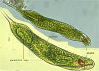 Xử lý nước thải bằng thủy sinh thực vật
