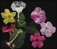 Những bông hoa và khả năng kì diệu