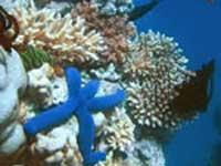 Một nửa số đảo san hô trên thế giới có thể biến mất