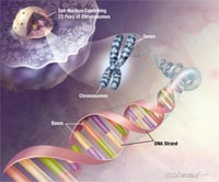 Bản đồ DNA mới giúp chống lại gen có hại