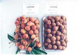 Bảo quản trái cây bằng màng MA