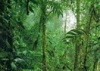 Diện tích rừng Amazôn bị phá nhiều gấp hai lần so với những số liệu ước tính