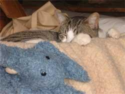 Bệnh lạ: Một bệnh nhân mắc bệnh viêm hạch do bọ mèo