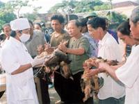 Thủ tướng chỉ đạo: Hành động khẩn cấp chống dịch cúm gia cầm