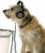Radio dành cho chó, mèo