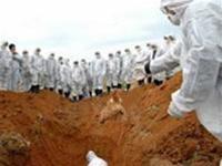 Trung Quốc: Chi hai tỉ nhân dân tệ phòng cúm gia cầm