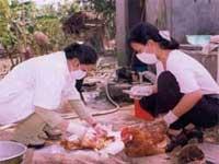10% dân số VN sẽ nhiễm H5N1, nếu...