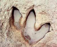 Bí ẩn sự phát triển mạnh mẽ của sinh vật tiền sử