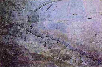 Hóa thạch động vật có xương sống trong đá vôi Trias trung ở Việt Nam