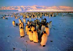 Núi băng giúp chim cánh cụt tiến hóa nhanh