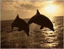 Trò chuyện giữa Cá Heo là một biểu tượng cho hệ thống cảnh báo Sóng Thần không dây
