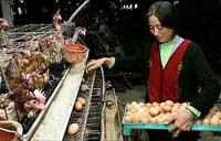 Trung Quốc điều tra trường hợp người nghi nhiễm cúm gia cầm