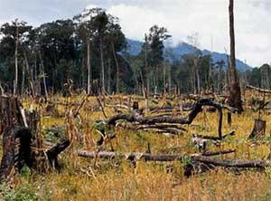 Tình trạng phá rừng trên toàn cầu vẫn ở mức báo động