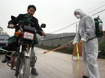 Trung Quốc: Ổ dịch cúm gia cầm thứ 9