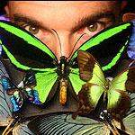 Cánh bướm hoạt động giống công nghệ LED