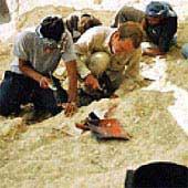 Phát hiện hóa thạch lạc đà khổng lồ