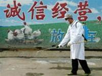 Ý tịch thu gà Trung Quốc và Thái Lan nhập khẩu dưới nhãn mác giả