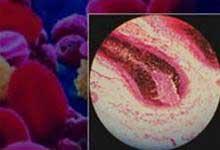 Tế bào mầm nang lông giúp hồi phục tổn hại thần kinh
