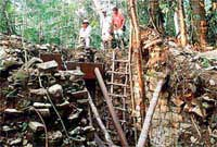 Dấu tích cuộc thảm sát kinh hoàng thời Maya