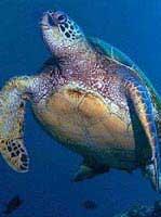 Phát hiện rùa từ thời kỳ khủng long