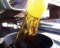 Nhiên liệu thực vật lên ngôi trước khủng hoảng dầu mỏ