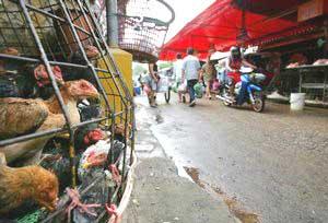 Indonesia: khả năng cúm gia cầm lây từ người sang người