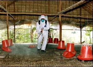Học bảo vệ môi trường trong mùa cúm
