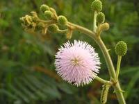 32 loài thực vật ở cạn xâm hại nguy hiểm nhất