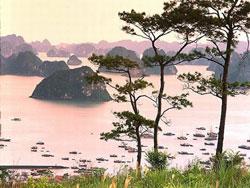 Quản lý, bảo vệ vườn Quốc gia Bái Tử Long