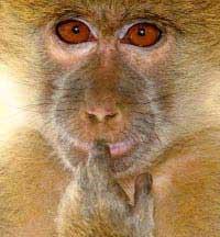 Khỉ cũng có tiếng địa phương
