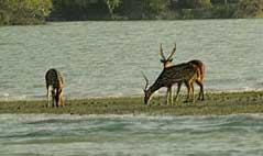 Công viên quốc gia Sundarbans (Ấn Độ)