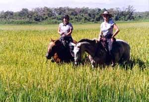Đột biến gien tạo nên mùi thơm của gạo hương lài