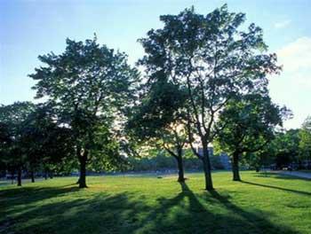 Trồng cây có thể không làm mát trái đất