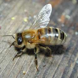 Ong có thể nhận biết mặt người