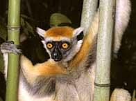 Khoanh vùng loài tuyệt chủng trên toàn cầu