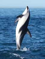 Hãy cứu những động vật biển ở thiên đường trắng