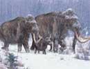 Đọc được ADN của voi mamút
