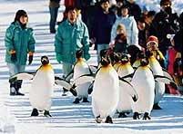 Giữ eo cho chim cánh cụt