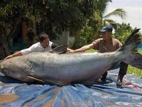 Lần đầu tiên đối thoại về cá da trơn toàn cầu tại Việt Nam