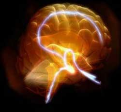 Tế bào thần kinh vẫn tiếp tục phát triển nơi não trưởng thành