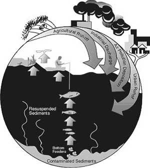 Hệ sinh thái thay đổi - Hiểm họa đối với sức khoẻ con người