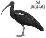 Số lượng lớn Quắm cánh xanh ở Vùng Chim Quan trọng Tây Siêm Pang