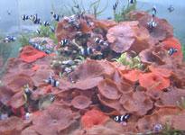 Đại dương và những phát hiện mới của y học