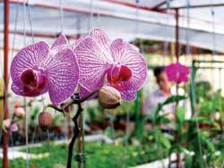VN: Động, thực vật tăng mức nguy cấp!