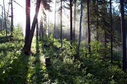 Thực vật cũng thải khí nhà kính?