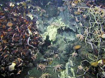 Những bí ẩn trong lòng đại dương